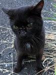 猫のシロゲ
